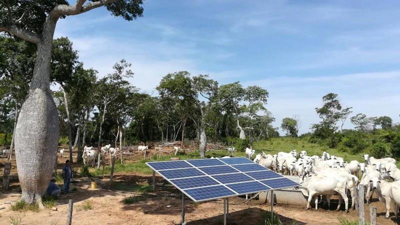 A solar panel amidst a herd of cows